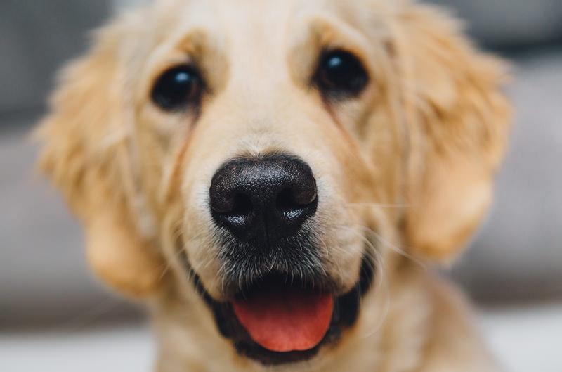 I nostri cani randagi
